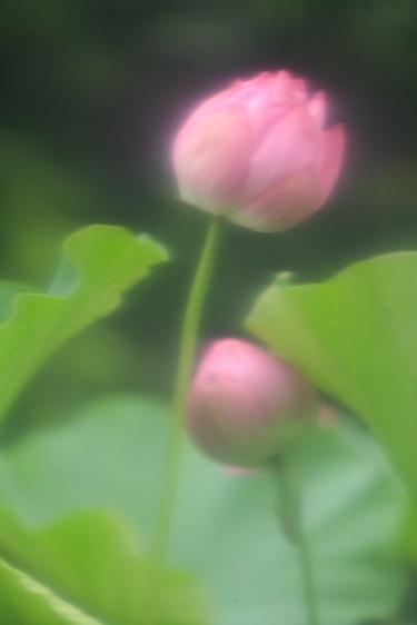 90-10_MG_0021.jpg